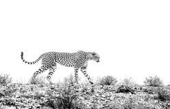 hunter milczenie zdjęcie stock