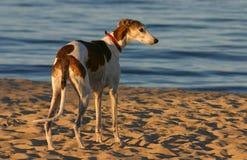 hunter na plaży Obrazy Royalty Free