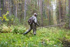 The hunter passes a damp place in a pine forest. Hunter in camouflage passes a damp place in a pine forest royalty free stock image