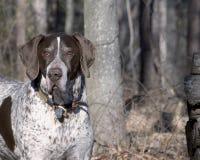hunter ptaka ii zdjęcia stock