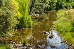 Hunter River, Upper Hunter, NSW, Australia royalty free stock photo