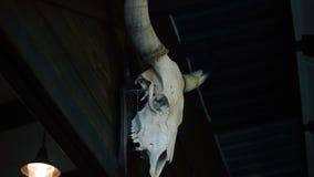 Hunter's skull trophy hanging in dark room, creepy bull skeleton with big horns. Stock footage stock footage