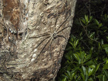Hunter spider stock photos