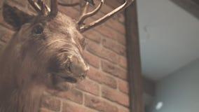 Hunter trophy. Stuffed animal. Whitetail deer buck. Deer head on wall. Elk head. Hunter trophy. Stuffed animal. Deer head on wall. Close up of stuffed deer brick stock video