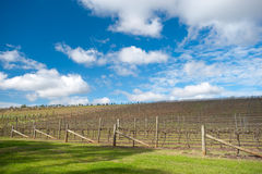 Hunter Valley, Australia Royalty Free Stock Images