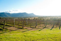 Hunter Valley, Australie Photos libres de droits