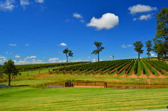 Hunter Valley. Scenic view of hunter valley against sapphire sky Royalty Free Stock Images