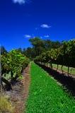 Hunter Valley Vineyard. Scenic view of hunter valley vineyard against sapphire sky Stock Image