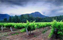 Hunter Valley Vineyards Fotografering för Bildbyråer