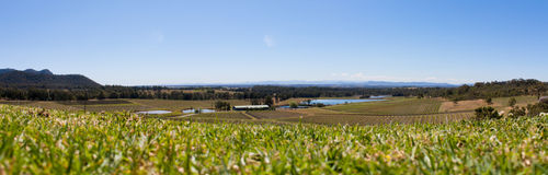 Hunter Valley Vineyards Panorama, Australie Hunter Valley Vineyards Panorama, Australie de NSW de NSW Photos libres de droits