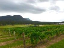 Hunter Valley vingårdar Fotografering för Bildbyråer