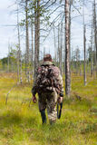Hunter walking in the swamp pine forest. Hunter with shotgun in the swamp pine forest on autumn hunting Royalty Free Stock Images
