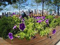 Hunter& x27; ponto de s - NYC - New York City - New York Imagem de Stock Royalty Free