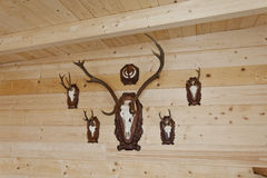 Hunting trophies mounted on wall. Set of hunting trophies mounted on timber wall Royalty Free Stock Photos
