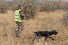 Hunters with a gun and german drathaar. Pigeon hunting with dogs.s stock photo