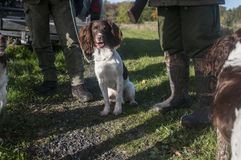 Hunters and hunting dogs relax efter hunt. Hunters and hunting dogs relax efter sunny hunting day in autumn royalty free stock photography