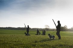 Hunters with hunting dogs walk through field. In sunlight stock images