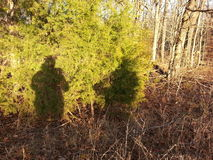 Hunters shadows on bush Royalty Free Stock Photo