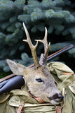 Hunters success, deer trophy Stock Image