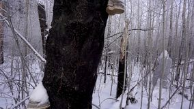 Hunters in the Woods. Armed Rangers in winter forest.  stock footage