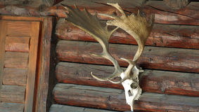 Hunting. Skull with horns on a hunting lodge Royalty Free Stock Images