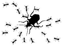 Hunting of ants Stock Images