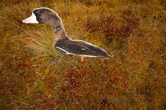 Hunting on a bog  with goose profile Stock Photo