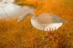 Hunting on a bog  with goose profile Stock Image