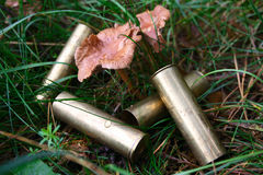 The hunting cartridges under mushrooms Royalty Free Stock Photo