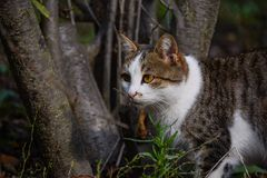 The hunting cat Stock Images
