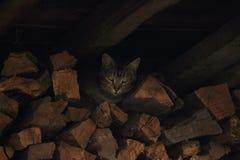 Hunting Cat. stock image