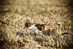 Hunting cat Royalty Free Stock Images