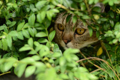 Hunting cat Stock Images