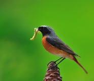 Hunting caterpillars. Stock Photo