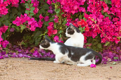 Hunting cats Stock Images
