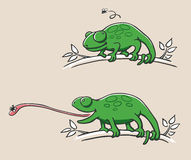 Hunting Chameleon. Illustration of a hunting chameleon sitting on a branch in two scenes. First: watching the fly; second: catching the fly Stock Photos