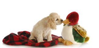 Hunting dog Stock Images