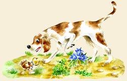 Hunting Dog. Cute dog looking at a bug Stock Photos