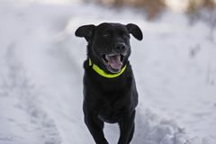 Hunting dog. In forest Stock Photos