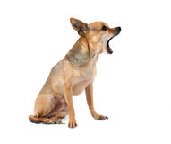 Hunting dog Stock Photos
