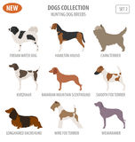 Hunting dog breeds set icon isolated on white . Flat style Royalty Free Stock Images