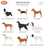 Hunting dog breeds set icon isolated on white . Flat style Stock Images