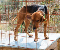 Hunting dog in cage Stock Photos