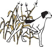 Hunting Dog in field. Mans best friend helping out on the hunt. Use this on a variety of outdoor Sports publications and news letters. Vector and high resolution Royalty Free Stock Photography