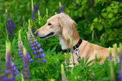 Hunting dog in forest Stock Image