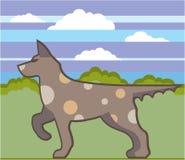 Hunting Dog illustration Stock Photos