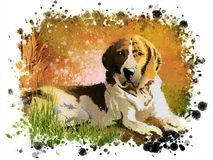 A hunting dog in the grass against the background of spray paint. royalty free stock image