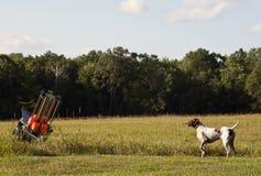 Hunting dog points at skeet thrower. German Short-Haired hunting dog, points at clay pigeon throwing maching Royalty Free Stock Image