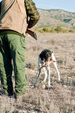 Hunting dog retreiving. Pointer hunting dog retreiving a quail to the hunter Royalty Free Stock Photography