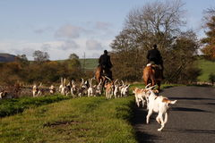 Hunting with dogs. Not fox hunting stock image